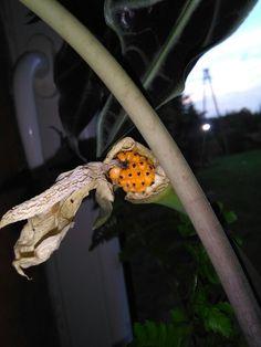 Owoce aleozji :-)