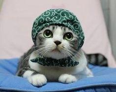 服を着た猫100連発! 猫服 おもしろ猫 コスプレ猫 かぶりもの 仮装猫 - NAVER まとめ