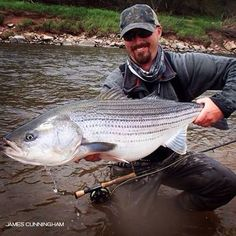 Striper on the fly.