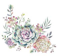 succulent watercolor