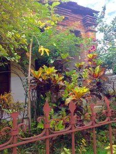 Jardín con crotos. Asunción-Paraguay