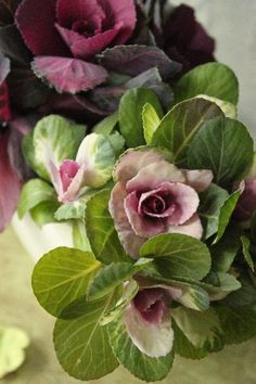 Gorgeous colors of winter cabbage