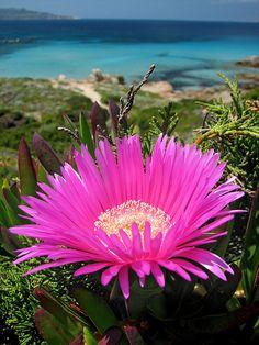 Colori di Sardegna by Stefano Ruggeri, via Flickr, Sardinia - Sardegna, Italy