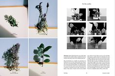The Plant issue 6 via It's Nice That