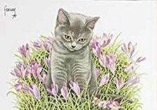 Postkaarten    Grijs kitten in krokussen    Francien Westering, van    C8990    Postkaarten, Lente, Bloemen, Tekeningen, Dieren, Katten,