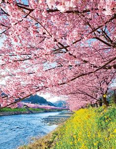 Crusing Down The River On A Sunday Afternoon - Kawazu, Shizuoka, Japan Beautiful Places In Japan, Beautiful World, Cherry Blossom Japan, Cherry Blossoms, Art Asiatique, Blossom Trees, Flowering Trees, Photos Du, Amazing Nature