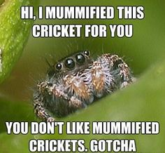 Misunderstood Spider Meme- I usually take spiders outside to set them free because I can hear this spider in my head, lol.