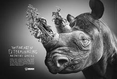 NOAH Menschen für Tiere e.V.: Rhino   http://www.gutewerbung.net/noah-menschen-fur-tiere-e-v-rhino/ #Advertising