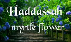 Haddassah myrtle flower