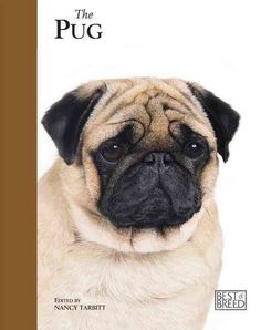 The Pug is one of the most popular breeds of dog, and here at last is a book to do it justice. The 'Best Of Breed' series is a ground-breaking truly breed specific book, from the first page to the las