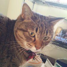 「おはにゃーん❗morning❗  #ねこ #猫 #猫写真 #ネコ #しましま軍団 #きじねこ #きじとら #キジネコ #キジトラ #cat #catstagram #instacat #kitty #neko #tabby #meow #고양이」