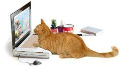 Windows 10へのアップグレードもオッケー!?猫っていつもガジェットに興味津々ですよね。ご主人さまがパソコンを使っていると、やたらといっしょに使いたいと、かまってほしがる猫も多いそうです。ちなみにすでにiPad