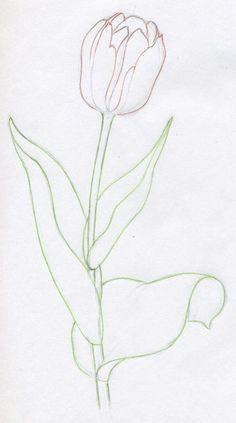 Flowers Drawing Draw Tulip Flowers In Few Easy Steps Tulip Flower Drawing, Flower Sketches, Watercolor Flowers, Flower Art, Watercolour Painting, Flower Drawings, Drawing Flowers, Watercolors, Tulip Painting