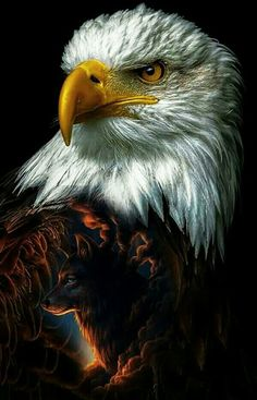 Types of Eagles - American Bald Eagle art portraits, photographs, information and just plain fun Eagle Images, Eagle Pictures, Animal Pictures, Types Of Eagles, The Eagles, Bald Eagles, Beautiful Birds, Animals Beautiful, Cute Animals