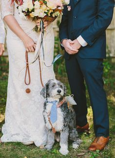 This pup - the ring bearer - has style! Love his tie :)