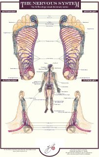 Nervous system reflexology chart by Balancing Touch Reflexology