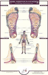 Nervous system reflexology chart by Balancing Touch Reflexology