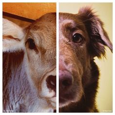 vegan: I don't see the difference... which is why I don't eat meat.
