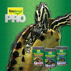 What does a turtle say? We don't really know, but if they could talk, they would be asking for ReptoMin® PRO Lifestages foods! Ddesigned to deliver the specific dietary needs of aquatic turtles during each stage of their development. Tetra Fish, Aquatic Turtles, Stage, Nutrition, Foods, Food Food, Food Items, Sea Turtles, Scene