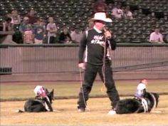 Team Ghostrider. Cowboy Monkeys Riding Dogs, Herding Goats at a baseball game!!!  This is so awesome!
