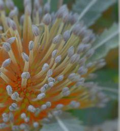 Botanical Gardens, Most Beautiful, Shots, Flowers, Plants, Plant, Royal Icing Flowers, Flower, Florals
