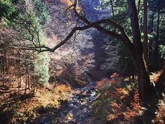 Autumn forests and cold streams of Gunma, Japan #traveljapan #traveljapan2018 #japaneseforest #gunma #darkmood #visualsoflife #outdoortones #moodynaturelandscapes #visualpoetry #visualcrush #instapoetry #poetryofinstagram #calledtobecreative #madetocreate #mixedmedia #moodygram #moodygrams #inkandverses #darkmoody #творчествобезграниц #япония #群馬県 #forests #harunashrine #mountharuna #takasaki #高崎市 Gunma, Autumn Forest, Japan Travel, Forests, Exploring, Japanese, Cold, Landscape, Create