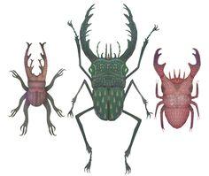 Stag Beetles by Vladimir Stankovic