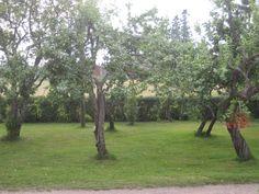Minun omenapuutarhani