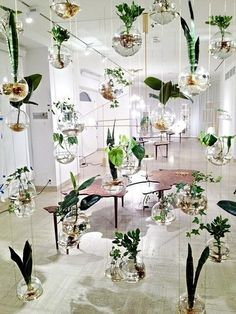 Suspended Flowers in Vases