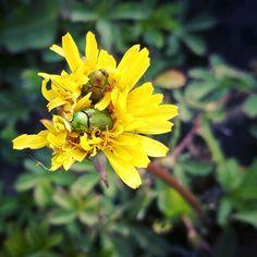 #instablooms #flowersofinstagram #petals #amazing #botanical #summer #flowermagic #floweroftheday #love #flowerporn #beautiful #bloom #photooftheday #flowers #blooms #picoftheday #blossom #sopretty #spring #floral #plants #prilaga #flowerstyles_gf #flower #flowerslovers #petal #florals #nature #Honor8 #DJamesBouin