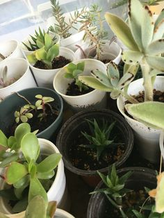 Planting Succulents, Plants, Plant, Planets