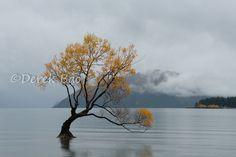 2015 Wanaka Autumn, Zew Zealand. New Zealand, Autumn, Explore, Places, Ideas, Fall, Thoughts, Lugares, Exploring