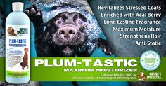 Maximize the moisture in your dogs life!