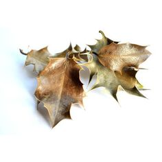 as autumn fades . X ღɱɧღ