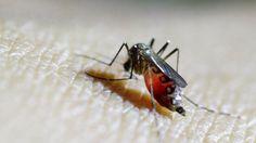 Zika virus: Texas reports first case from local mosquito - http://www.worldnewsfeed.co.uk/news/zika-virus-texas-reports-first-case-from-local-mosquito/