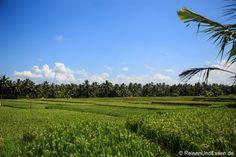 #Ubud auf #Bali bietet viele Highlights. Ich zeige dir meinen Rundgang durch Ubud mit ganz vielen Bildern.