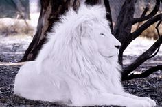 White Lion- I know that much white ink would hurt like heck, but this is BEAUTIFUL!