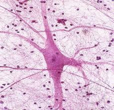 Neuron under microscope | projeto 7 | Pinterest