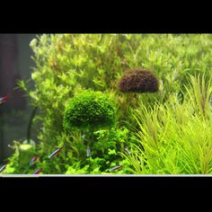 Floating Plastic Moss Ball Water Plant Decoration Fish Crystal Shrimp Tank(Moss not included)(China (Mainland)) Aquarium, Shrimp Tank, Floating Plants, Water Plants, Plant Decor, Herbs, Crystals, Fishing Decorations, Flowers