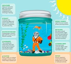 Really cool site!  This links to a PDF with step-by-step directions and photographs of a tabletop biosphere in a glass jar.  (Environment stream lesson activity)