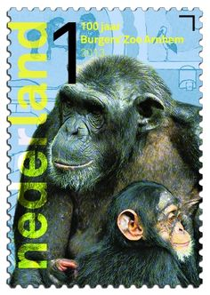 Chimpansee    http://collectclub.postnl.nl/pages/detail/s1/10220000001790-2-21010000000080.aspx