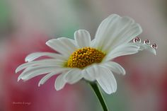 Don't forget me by Benedetta Lavezzi - Photo 144444227 - 500px