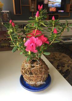 d5049bbb9 Kokedama de azaleia Kokedama é uma técnica japonesa de plantar sem vaso.  Pode ser pendurada