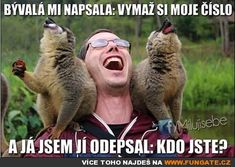 Back from Madagascar // funny pictures - funny photos - funny images - funny pics - funny quotes - Funny Shit, Funny Jokes, Funny Stuff, That's Hilarious, Awesome Stuff, Funny Things, Funny Animal Memes, Funny Animals, Cute Animals