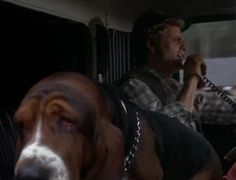 """Fred the Basset Hound from Smokey and The Bandit -  partner to truck driver Cledus """"Snowman"""" Snow (the late Jerry Reed)."""
