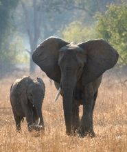 Help stop the ivory trade