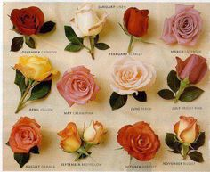 What rose color is your birth month? Love Rose, Pretty Flowers, Absolutely Flowers, White Flowers, Black And White Tumblr, Ronsard Rose, Birth Month Flowers, Birth Flower, Types Of Roses