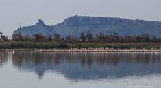 Il Parco naturale di Moletargius. Il loro simbolo è il Fenicottero rosa. Nello sfondo anche la Sella del Diavolo. Sardinia, Landscapes, Italy, Island, Mountains, Travel, Animals, Places, Paisajes