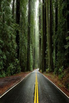 Avenue of the Giants, Humboldt County, Redwoods State Park, California. State Parks, Places To Travel, Places To See, Humboldt Redwoods State Park, Parcs, Death Valley, Adventure Is Out There, Belle Photo, The Great Outdoors