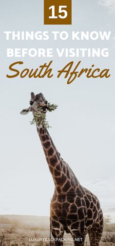 15 Things To Know Before Visiting South Africa | What To Know Before Travelling To South Africa | Travel To South Africa | Safari Travel | Information Before Visiting South Africa